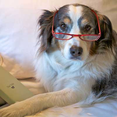 Yes, you can teach an old dog new tricks